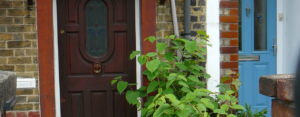 Has Your Property Seller Lied About Japanese Knotweed? Here's What To Do
