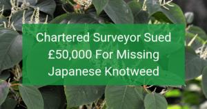 Has Your Surveyor Missed Japanese Knotweed?