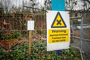 Your Japanese Knotweed Legal Obligations