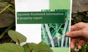 What Does Japanese Knotweed Really Do?